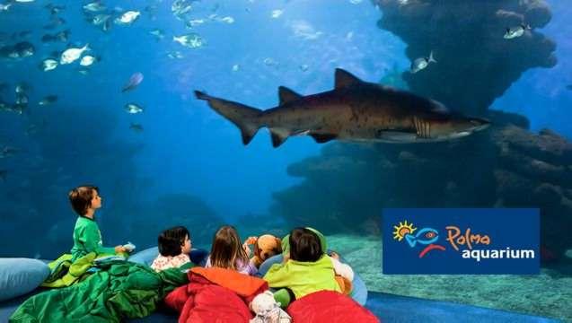 Theme Parks in Samta Ponsa - Palma Aquarium